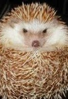 Dame Hedgie