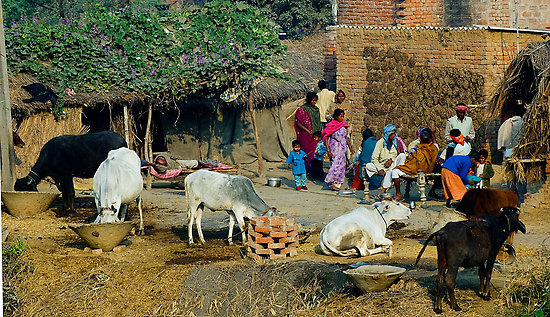 life in a pakistani village essay Importance of village welfare india is said to be a country of villages majority of our people live in villages hence, village welfare is very important for the progress of our country.