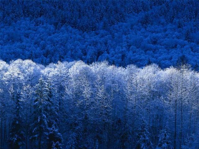 A Lovely Winter