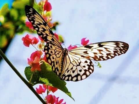 Haiku - To Butterfly