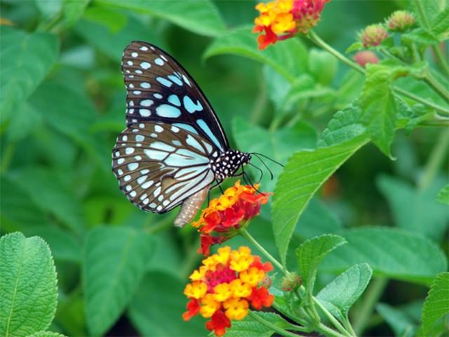 Butterfly 1 - Beautiful Butterflies