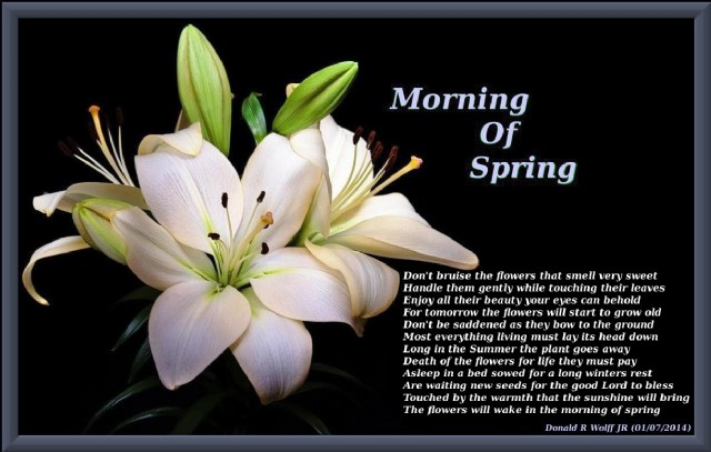 Morning of spring poem by donald r wolff jr poem hunter topics of this poem flowers mightylinksfo