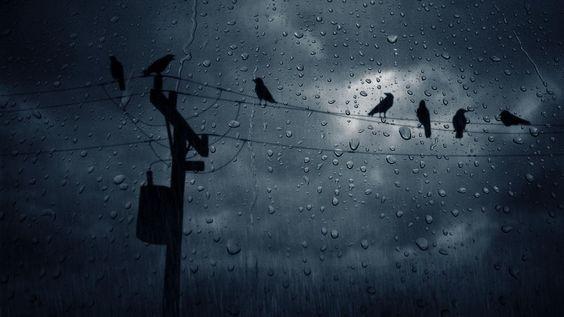 The Rain Lashes
