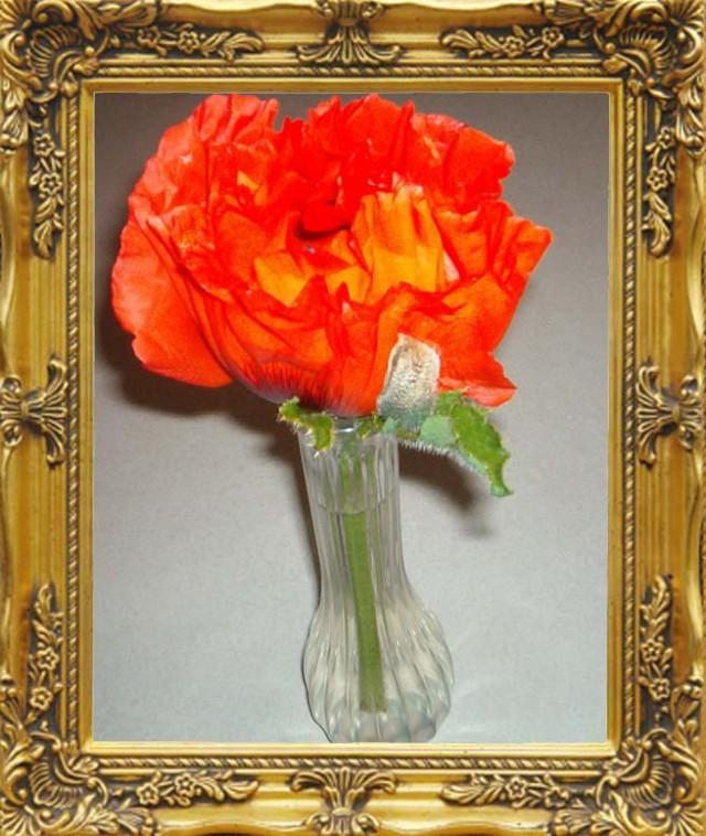 Oriental poppy poem by marilyn lott poem hunter oriental poppy poem by marilyn lott mightylinksfo