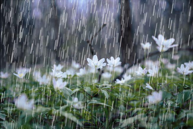 Rain, Rain And
