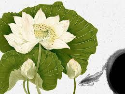 Lotus flower poem by jeanne jansen van vuuren poem hunter lotus flower poem by jeanne jansen van vuuren mightylinksfo