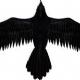 Raven Skye