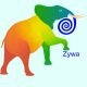 Zywa Zywa
