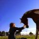 Horse Lass